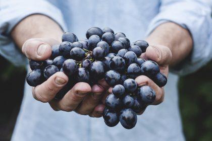 Гроздья здоровья: 6 полезных свойств винограда