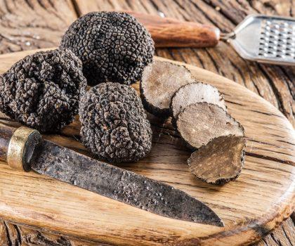 Самый дорогой гриб в мире или как проходит охота на трюфели