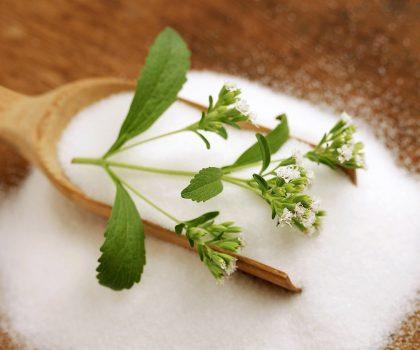 Стевия: сладкий цветок папоротника