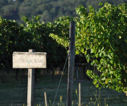 Розовое вино и Франция: La vie en rose