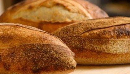 Cамый масштабный пекарский проект «Фестиваль хлеба»