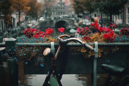 Сыр, селедка, да цветы: гастрономическая жизнь Амстердама