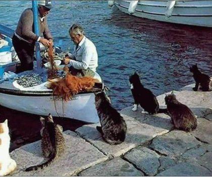Готовим плов с мидиями на огромной сковороде в Рыба-Пила