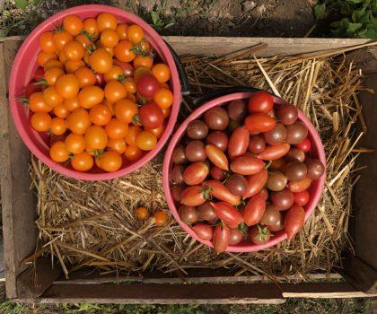 Шеф говорит: помидоры или что в Одессе едят в августе
