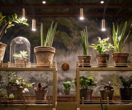 Новий заклад: в домі з 200-літньою історією на Подолі відкрився ресторан DOM №10