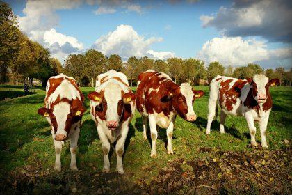 Поддержка тренда: как государство поможет фермерам