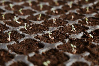 Ученые выяснили, что семена льна способны снизить риск ожирения
