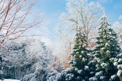 Лісова казка: заміські ресторани для зустрічі Нового року