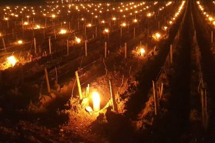 Виноградники Бургундії палають — як виноградарі рятують врожай 2020 року від заморозків